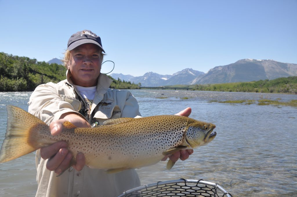 A large Waterton RIver Brown Trout which ate a Dry-Fly