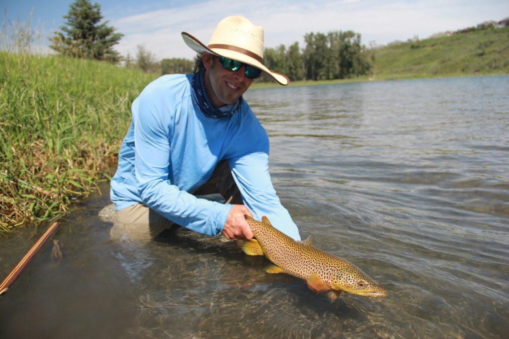 Bow River Brown Trout
