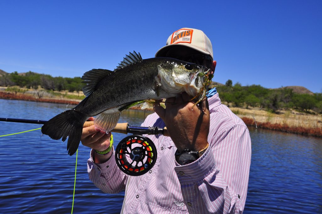 Arizona bass dave brown outfitters fly fishing for Fishing in arizona