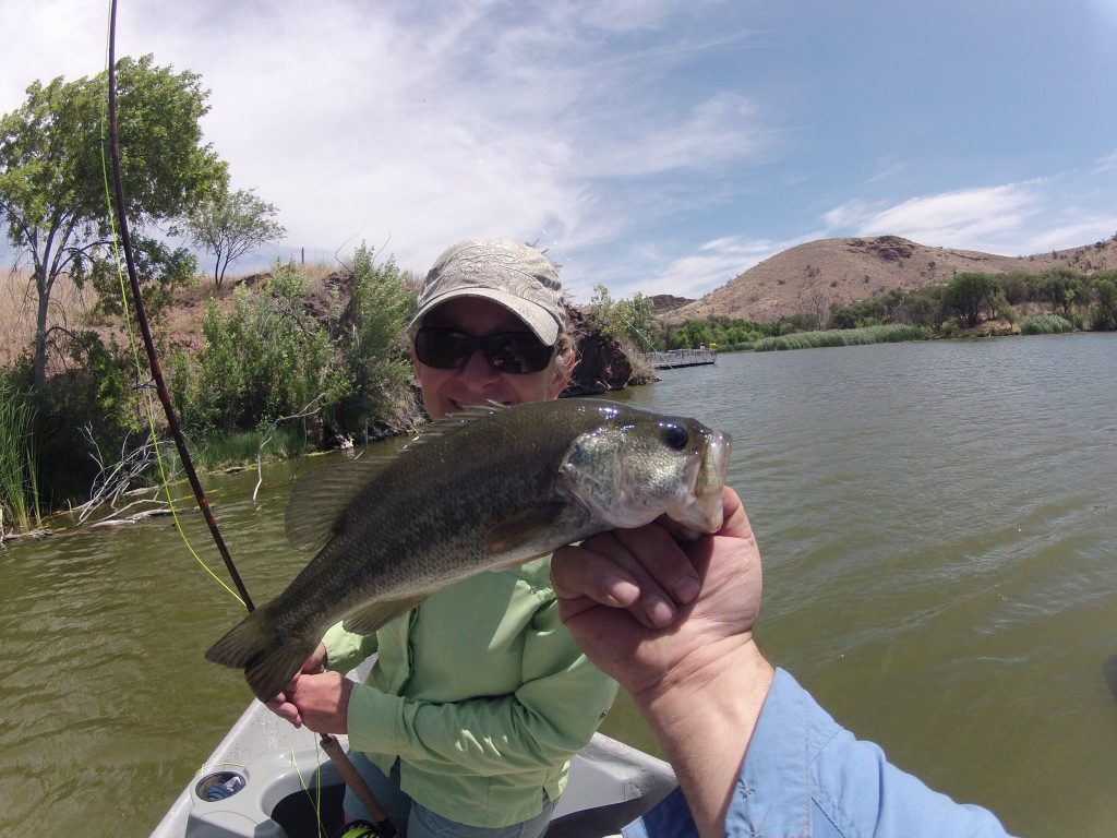 Arizona bass fly fishing wing shooting adventures for Bass fly fishing