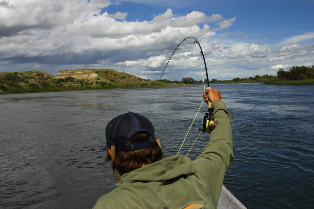 Dave brown outfitters fly fishing links fly fishing for Missouri river fishing