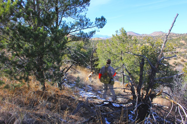Mearns Quail Hunting - Arizona Wingshoottng
