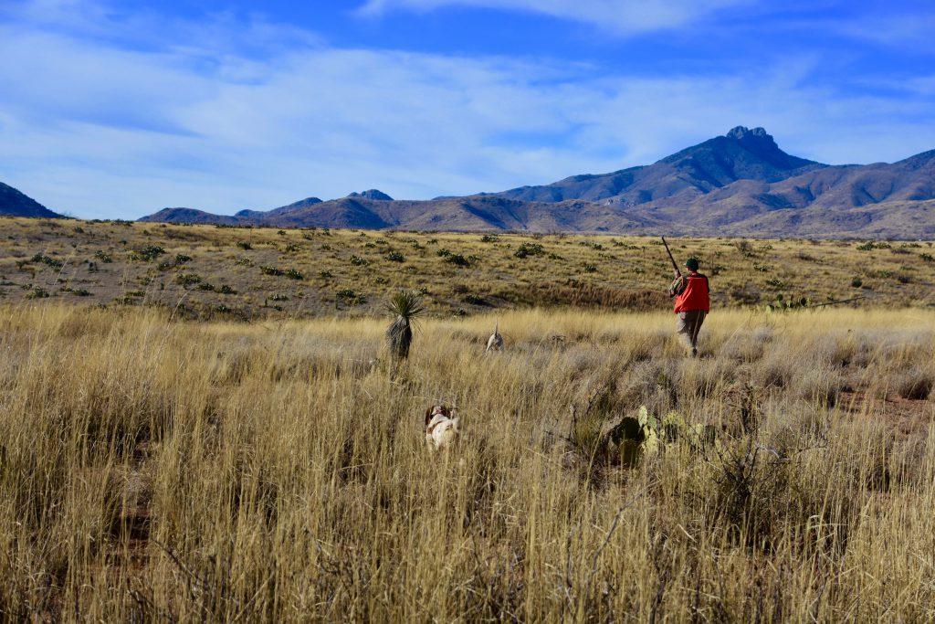 Desert Quail Hunting