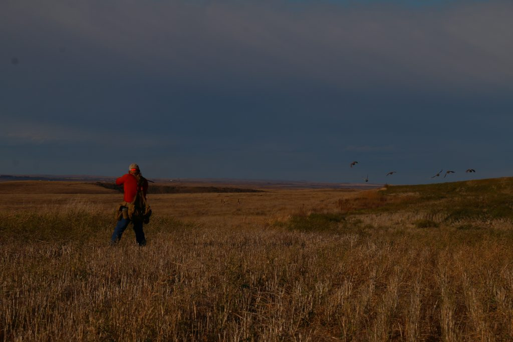 Covey Rise _Saskatchewan Upland Bird Hunting