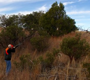 Mearns Quail Covey Rise