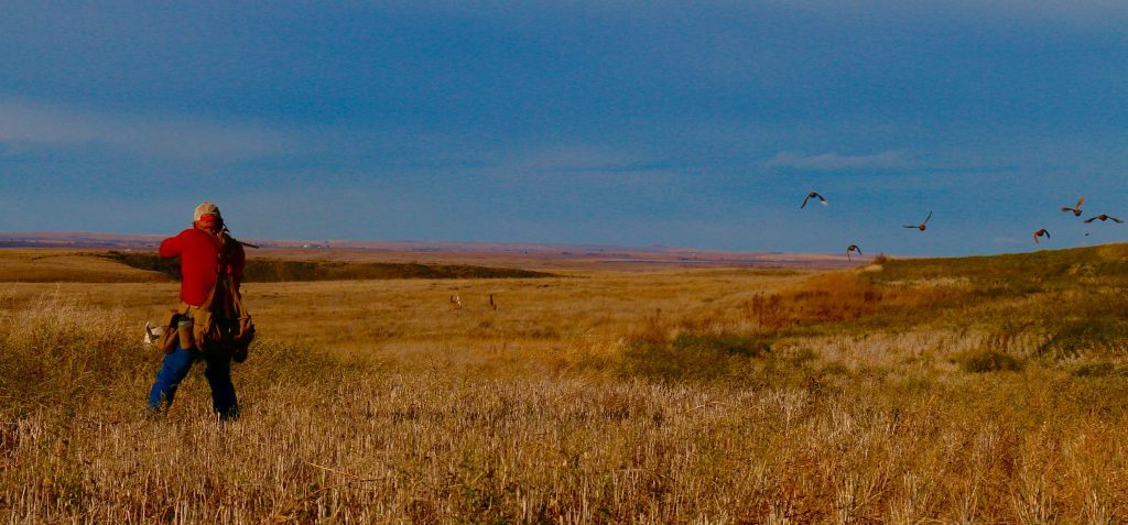 Saskatchewan Uland Bird and Waterfowl Guides