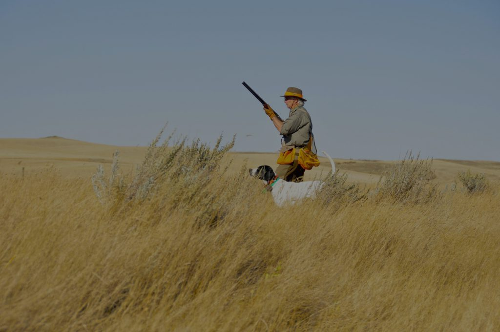 Covering a Point -Saskatchewan Upland Bird and Waterfowl Guides