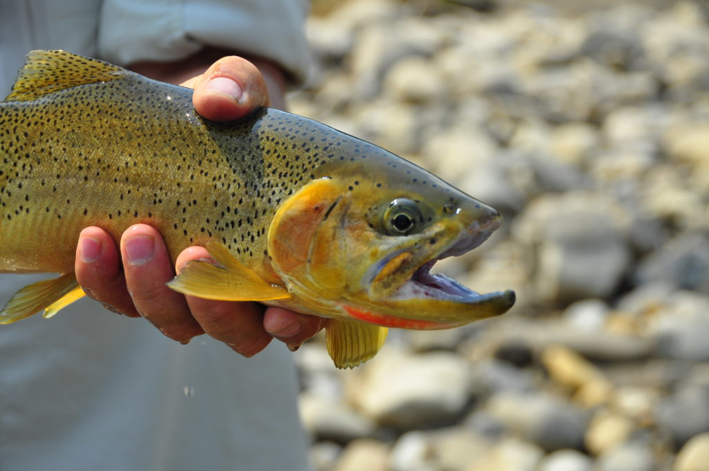 Elk River Fly-Fishing Guides