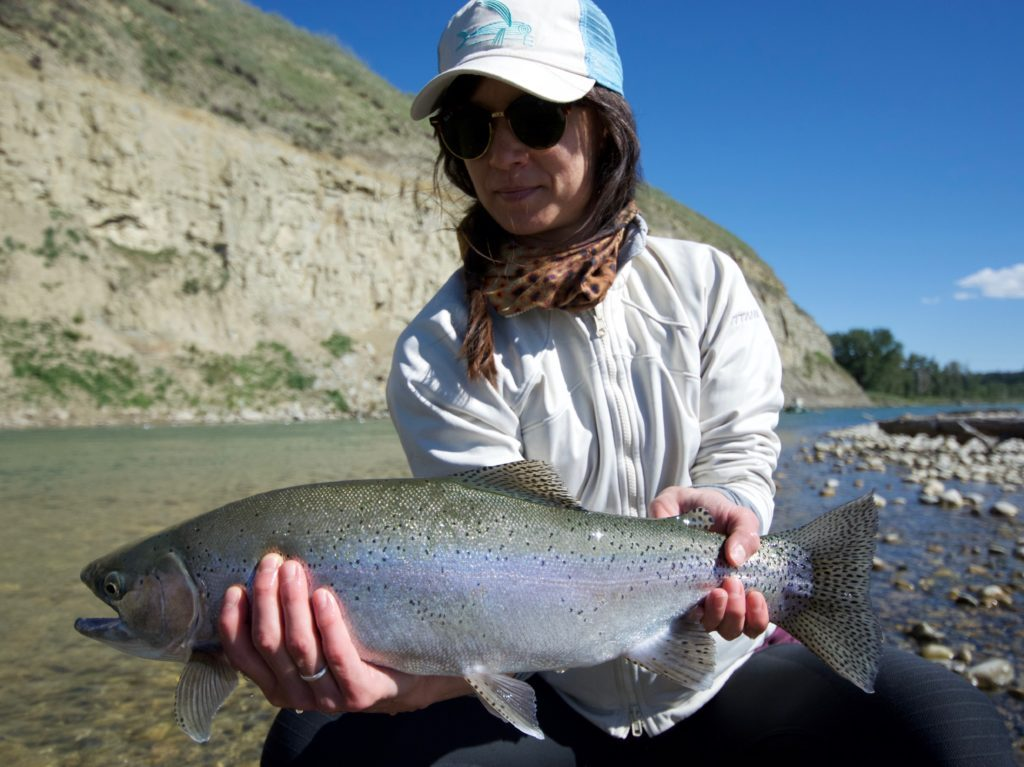 Streamer eating Bow River Rainbow